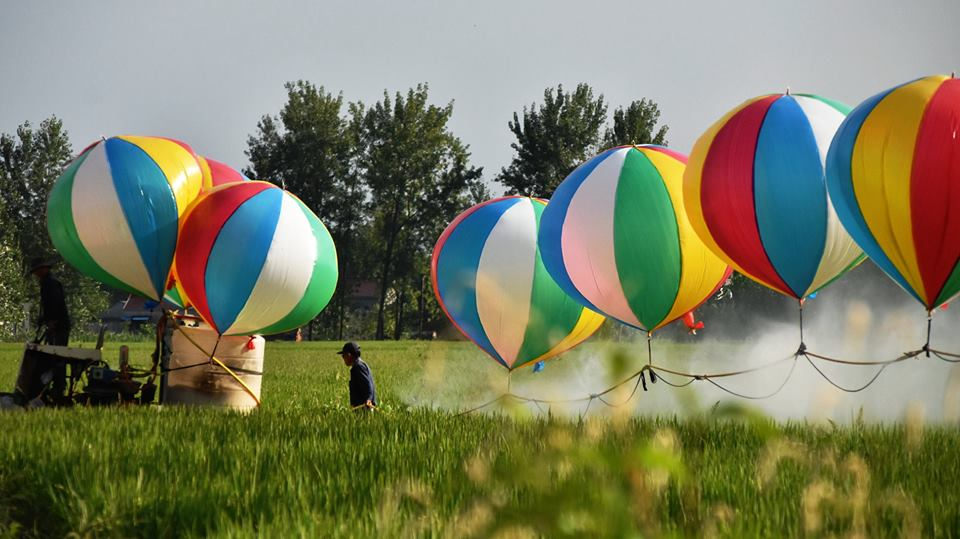 Creative farmer uses balloons to spray pesticides
