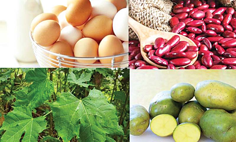Diet for dengue and chikungunya patients
