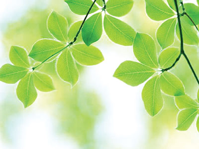 Smiles of green leaves
