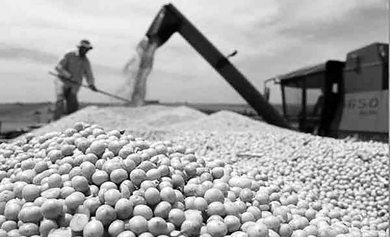 Brazil to exported 83m tonnes of beans in Nov